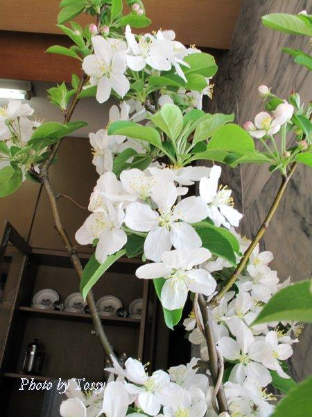 ひめりんご 花4