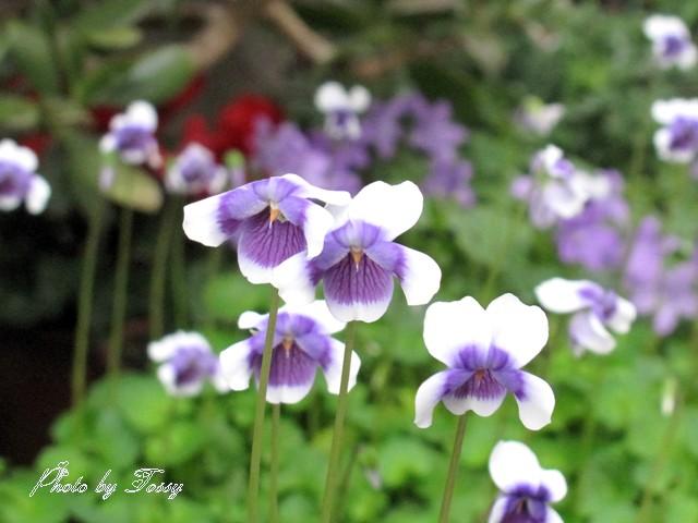 スミレに似た花3