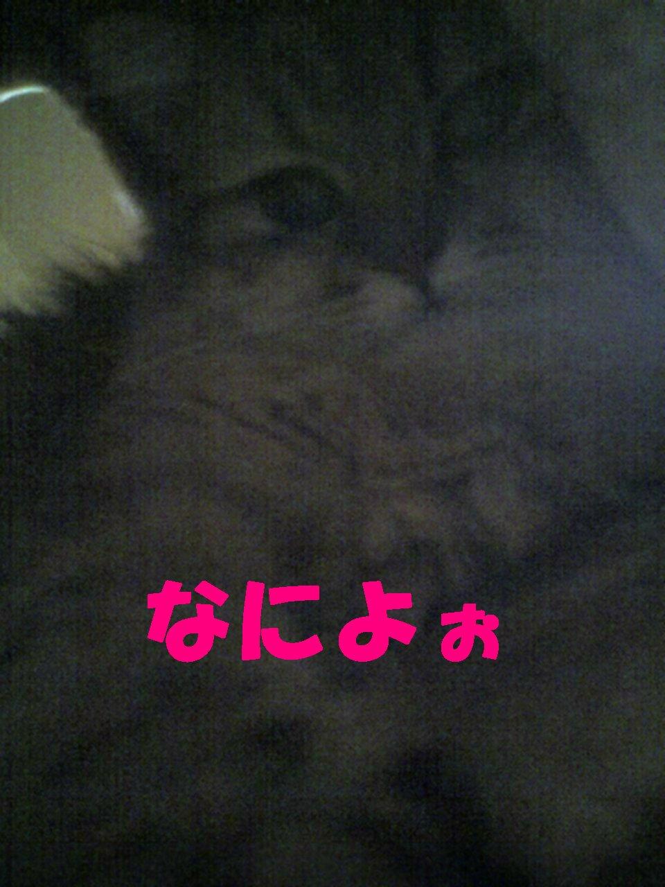 PAP_0158_sh01.jpg