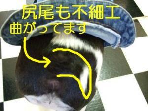 2006_10250025.jpg