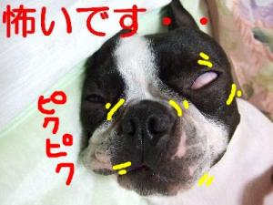 2006_10310014.jpg