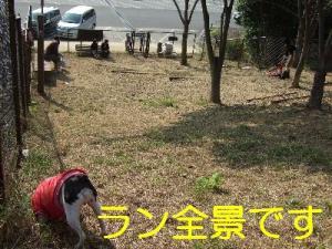 2006_11050055.jpg