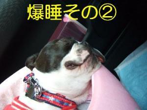 2006_11050083.jpg