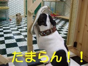 2006_11080154.jpg