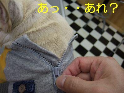 2006_12060096.jpg