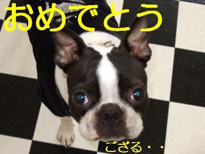 2007_01030218.jpg