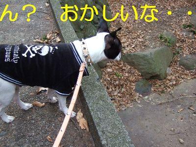 2007_01030232.jpg
