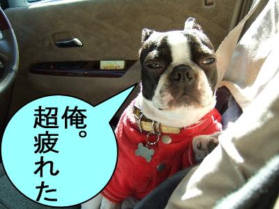 2007_01080134.jpg