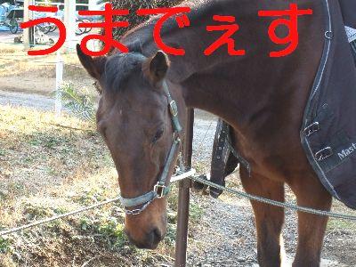 2007_01150046.jpg
