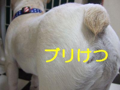 2007_04020086.jpg