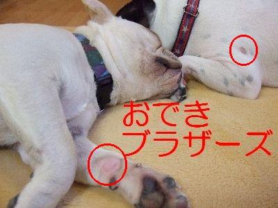 2007_05230080.jpg