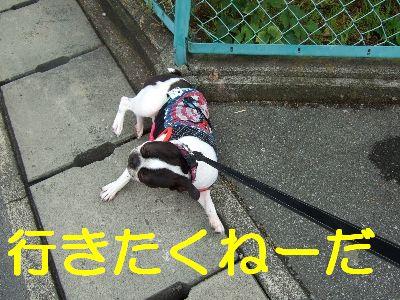 2007_06010123.jpg
