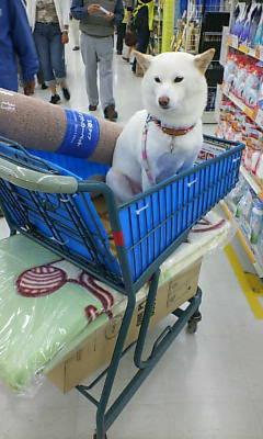 ホームセンターにお買い物に行きました♪