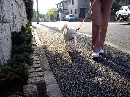 歩きますよ~