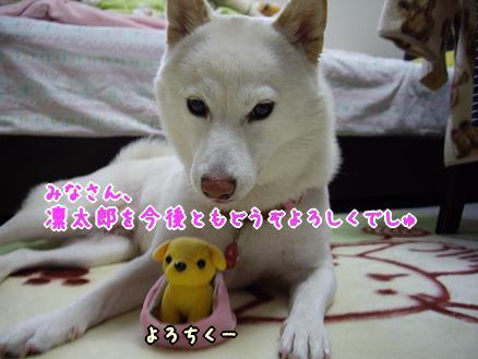 これからも凛太郎をどうぞよろしくー!
