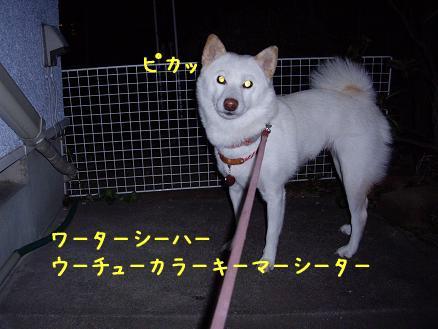 宇宙犬@凛