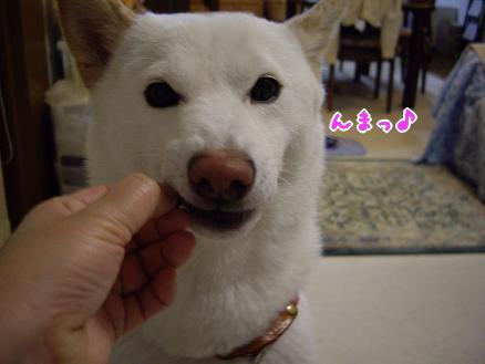 サイコー♪( ̄ー+ ̄)ニヤリ