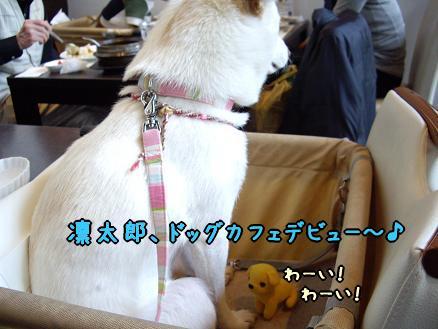 凛太郎、ドッグカフェデビュー♪
