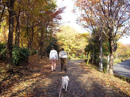 朝の散歩コース