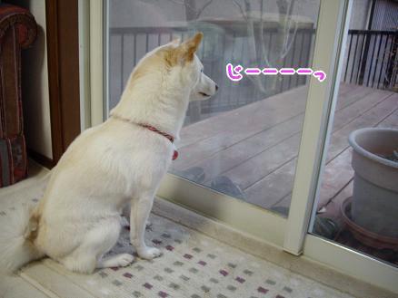 ネコちゃん発見!