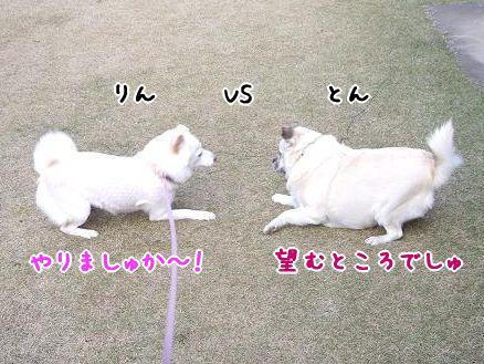 凛 VS とん
