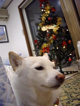 凛ちゃんとクリスマスツリー