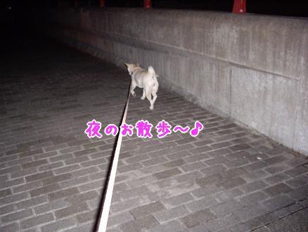 夜のお散歩中♪