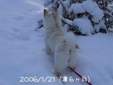 2006年のドカ雪