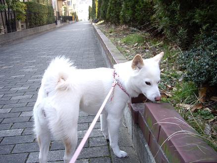 いつものお散歩コース♪
