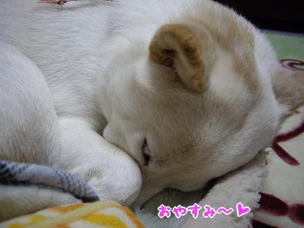 おやすみ~♪