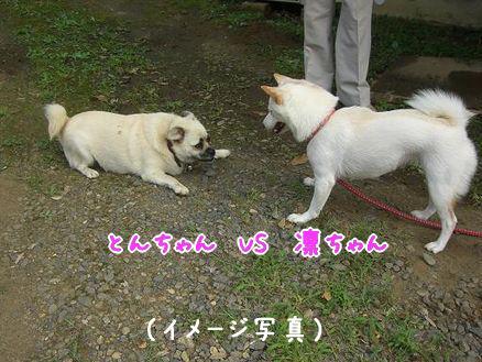 とんちゃんとの再会(イメージ写真)