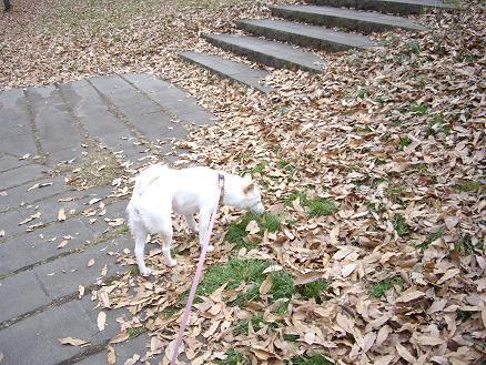 枯れ葉がいっぱ~い
