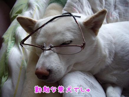 凛々しいというよりは・・・おじいちゃん犬?
