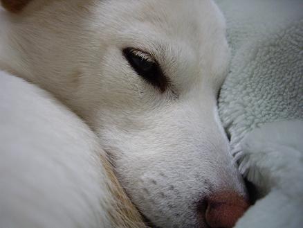 眠いの・・・
