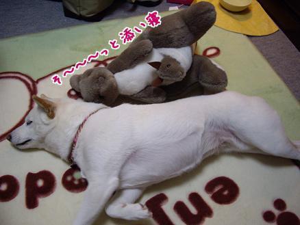 カンガルー親子と添い寝♪