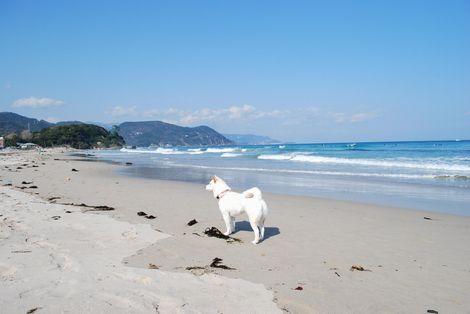 凛と白浜の海