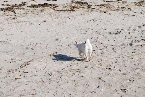 砂浜を走る~