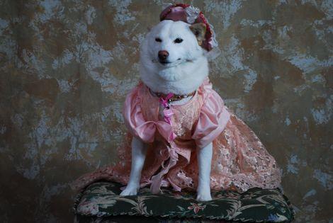 お姫様になりました