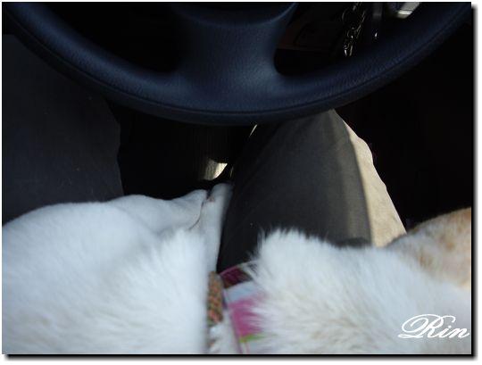 車の中では爆睡中