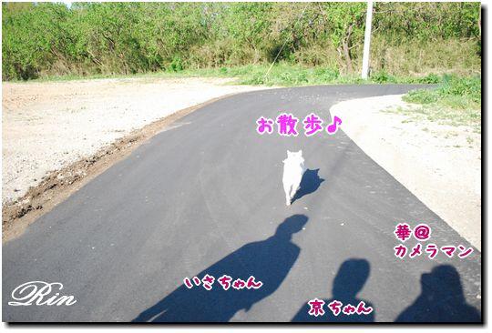 朝の散歩♪