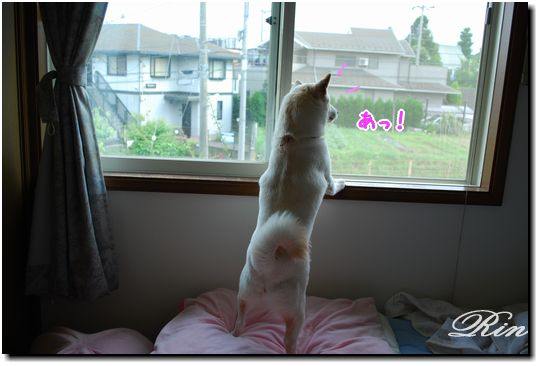 2階の窓から眺めてます