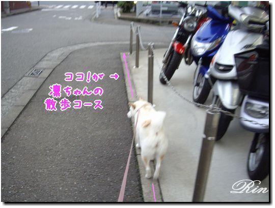 凛ちゃんのお散歩コース♪