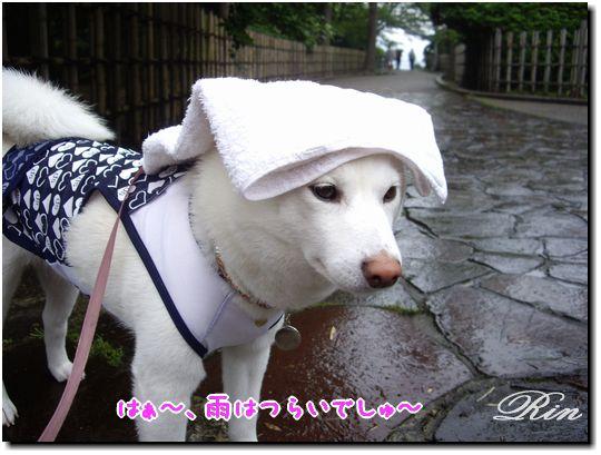 二日目は雨・・・しとしと
