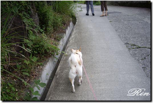 急な坂道が多いご近所の散歩コース
