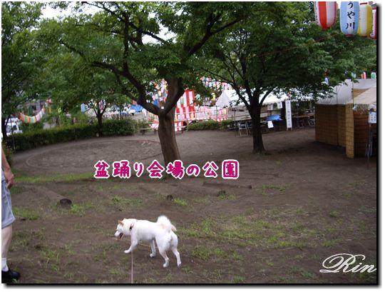 公園が盆踊り会場に変身!
