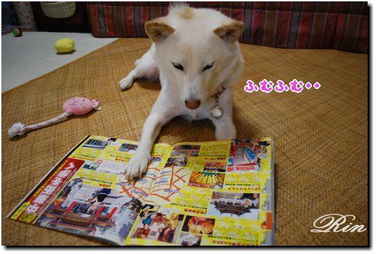 何か雑誌を読んでいます