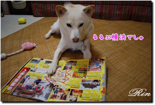 横浜の本でしゅ