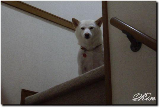 階段に隠れてます