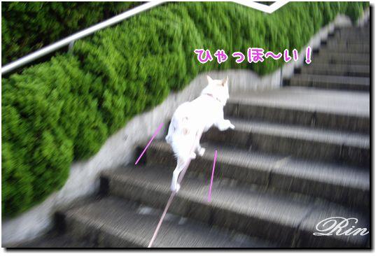 階段をダーシュッ!