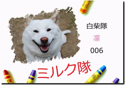 ミルク隊 No.006 白柴☆凛
